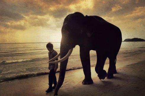 Ashin és az elefánt