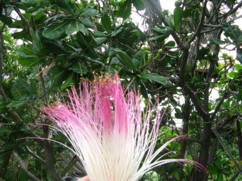növény 1